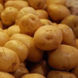 BIO brambory z Vysočiny 1 kg