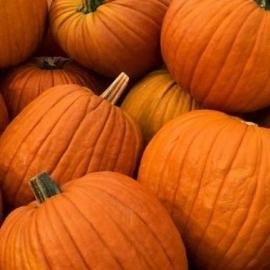 Halloweenská jedlá dýně Yellow Girls z Bílých Karpat 1 ks