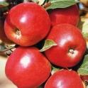 BIO Jablko z Vysočiny 0,5kg