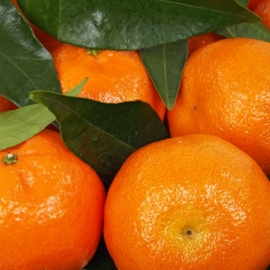 Mandarinky 0,5kg