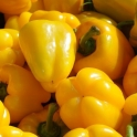 Papriky žluté 1 ks