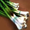 BIO česnek s natí z Bílých Karpat svazek