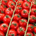 Cherry rajčata z Moravy 0,5 kg