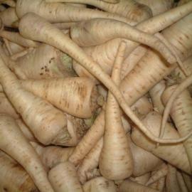 Petržel kořenová 0,5kg