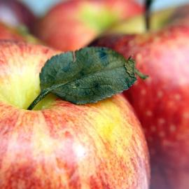 Jablko Gala 0,5kg