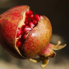 BIO granátové jablko 1ks