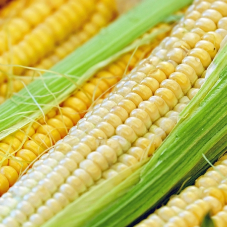BIO kukuřice 1ks