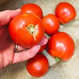 Rajčata kaviárová z Jižní Moravy nestříkaná 0,5 kg