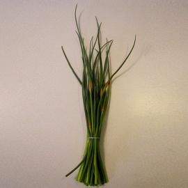 Česnekové výhonky 1 svazek