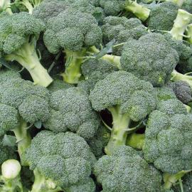 BIO brokolice z Vysočiny 1ks