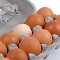 Slepičí vejce z podestýlky