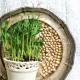 Microgreens hrášek květináček 1ks
