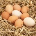 BIO vejce z volného chovu