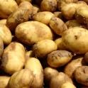 Nové brambory z Vysočiny 1 kg