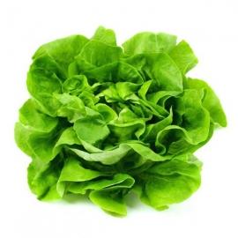 Salát hlávkový zelený z Jižní Moravy 1ks