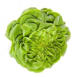 Salát Salanova zelený z Jižní Moravy 1 ks