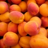 Meruňky 0,5kg
